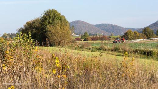 Im Gebiet Langfeld/Toktri (Foto S. Trösch)
