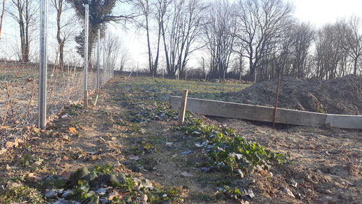 Der Interkulturelle Garten nimmt Formen an :-) Februar 2018, DAF