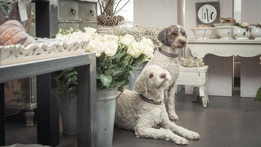 Cara und Fyla Hunde Blütentanz Küttigen