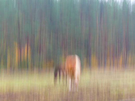 Nein, das Foto ist nicht unscharf: Es ist abstrakt!