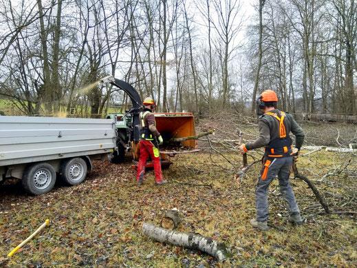 Baumfällungen mit Aufarbeitung zu Brennholz, Häckselarbeiten der Baumkronen und anschließendem Abtransport