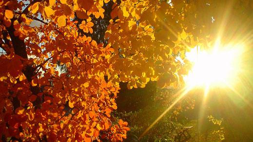 Herfst zonnetje