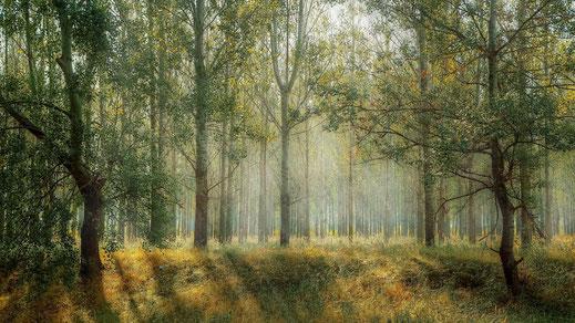 Wald, Frühlingssonne