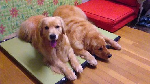 たたみ,畳,ペット,ペット用品,座敷,共有,犬猫,