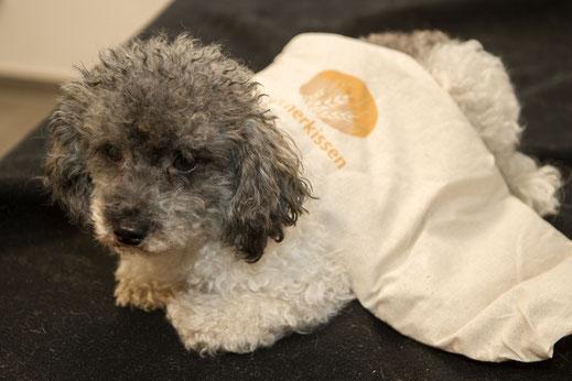 Thermotherapie bei Hunden
