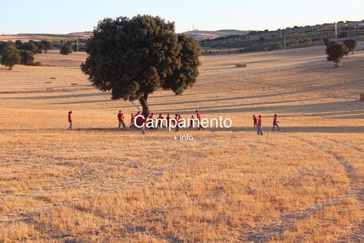 campamento, idiomas, inglés, francés, profesores nativos, overall camp
