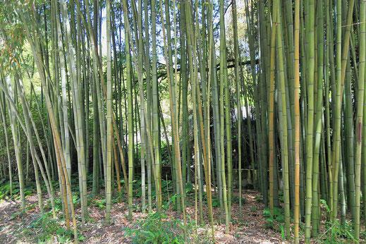 UB211F003_«2014 Suchum, Ogród botaniczny (24)» par Photo: Hons084 / Wikimedia Commons. Sous licence CC BY-SA 4.0 via Wikimedia Commons - https://commons.wikimedia.org/wiki/File:2014_Suchum,_Ogr%C3%B3d_botaniczny_(24).jpg#/media/File:2014_Suchum,_Ogr%C3%