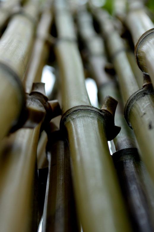 BU211F158_«Muchos bambúes» par Carmen Rey — Travail personnel. Sous licence CC BY-SA 3.0 via Wikimedia Commons - https://commons.wikimedia.org/wiki/File:Muchos_bamb%C3%BAes.JPG#/media/File:Muchos_bamb%C3%BAes.JPG