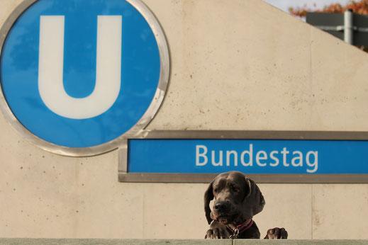 berlin mit hund, Melanie Knies, Hundeabenteuer, Hundekrimi, Hundewanderung, Hundeschule, Fellnasen-Express