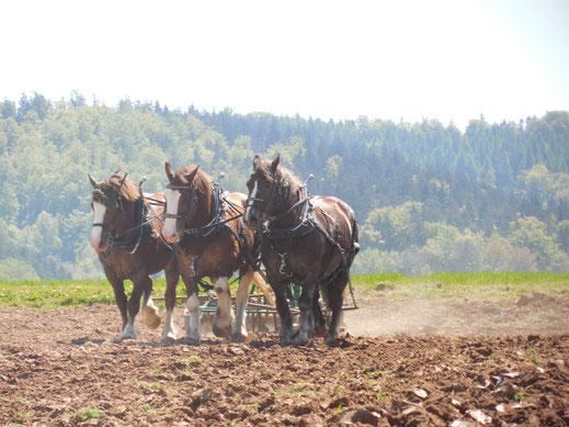 Die Bretonen Tina, Ramon und Paquerette am Kultivator mit Walze