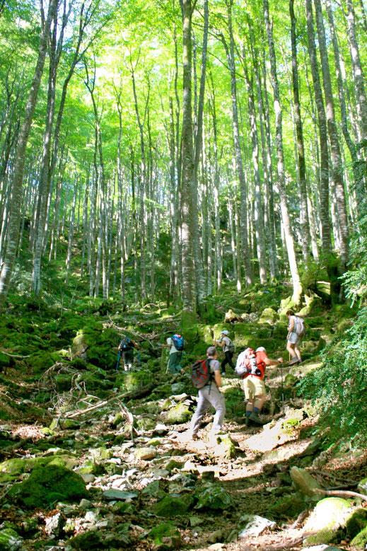Aoulhet Saint-Pé-de-Bigorre