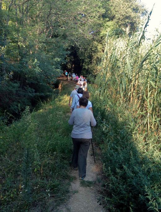 Marche de Randos Canétoises  Marche Canet , le canal du moulin , l'arboretum - 26 juin 2018 Marche de Randos Canétoises  Marche Canet ,le chàteau, le canal du moulin , vers la route de Villelongue - 11 sept 2018