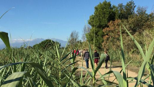 Marchez en plaine et aux environs de Canet avec Randos Canétoises.
