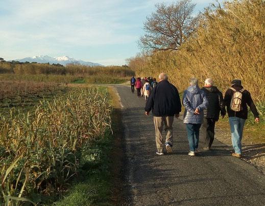 Randos Canétoises: marche Canet Route de Villelongue Canal du Moulin   - 7 janvier 2020