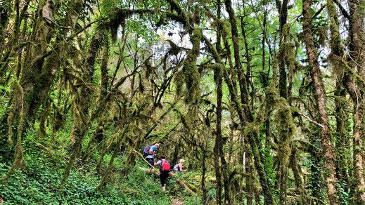 Randos Canétoises : Niveau 2 Corsavy et la forêt de lichens - 4 juin 2019