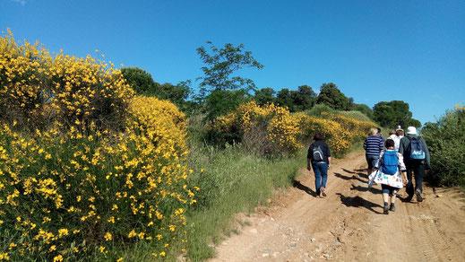 Randos Canétoises: marche Peyrestortes le 21 mai 2019