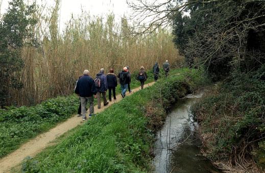 Randos Canétoises: marche Canet Ravin de la Vignasse arboretum Canal du Moulin   - 25 février 2020