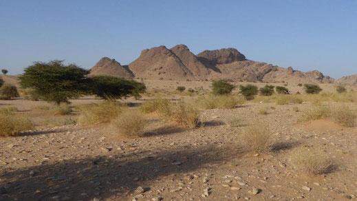 Station du Sahara marocain sur Acacias dans la région d'Aousserd (Dakhla-Oued Ed Dahab)