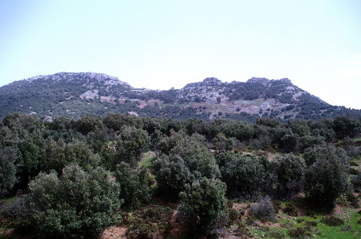 Chênaie de Bab-Bou-Idr, Djebel Tazzeka, habitat inédit d'I. tagis reisseri trans ad atlasica