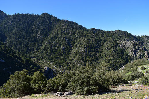 Localité de la ssp. dujardini, Djebel Tizouka, Rif occidental, 2018, ©Frédérique Courtin-Tarrier