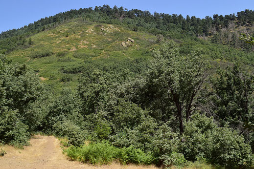 Site et lisière du biotope, Djebel Tisirène, Rif occidental, 2018, ©Frédérique Courtin-Tarrier