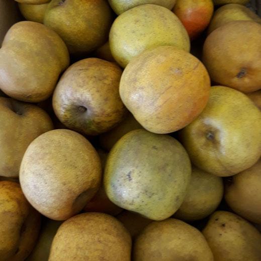 palox de pommes clochard à la cueillette producteur les saveurs de Gâtine