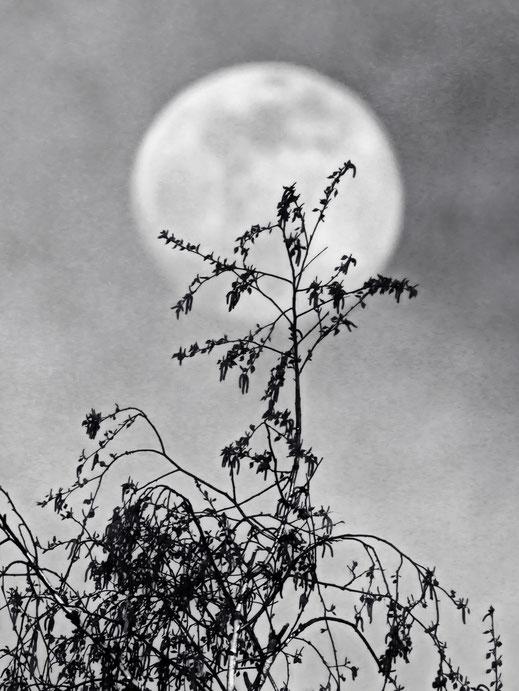 Mond Mondfotografie