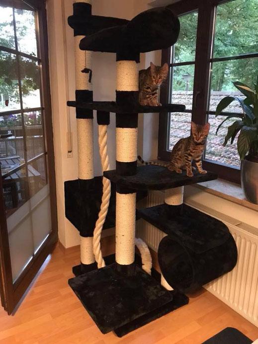 Bao und Bayu in ihrem neuen Zuhause.