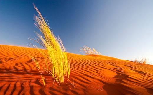 Desert, Red Sand Dune, Desert Grass, Namib Naukluft Park, Sossusvlei, Namibia, Africa