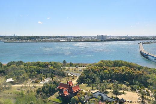 浜名湖クレソン