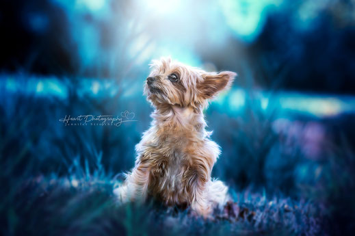 Composing, Bildbearbeitung, Fantasy, Hundefotografie, Hunde, Hund, Hunde in der Natur, Tierfotografie, Hunde