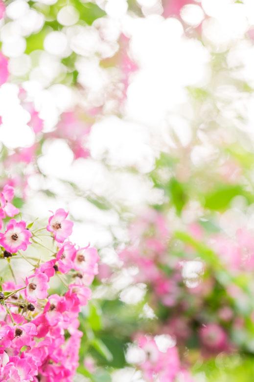 Sommerhochzeit, Blumen, Ambiente