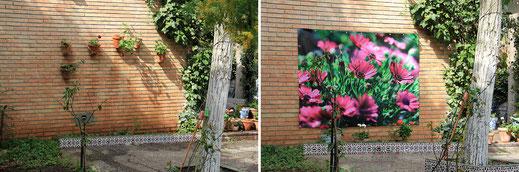 La imagen GF01799 de flores y la situación antes y después.