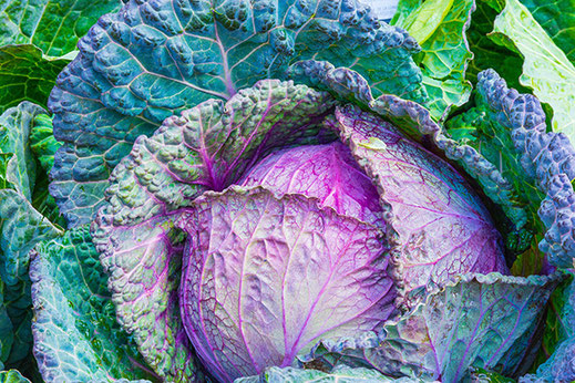 Radiant Reality Blog | Revitalize Your Mitochondria | Glutathione | Cruciferous Vegetables - Cabbage