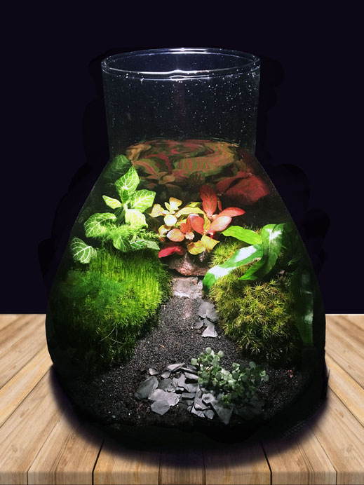 Terrarium design vegetal deco