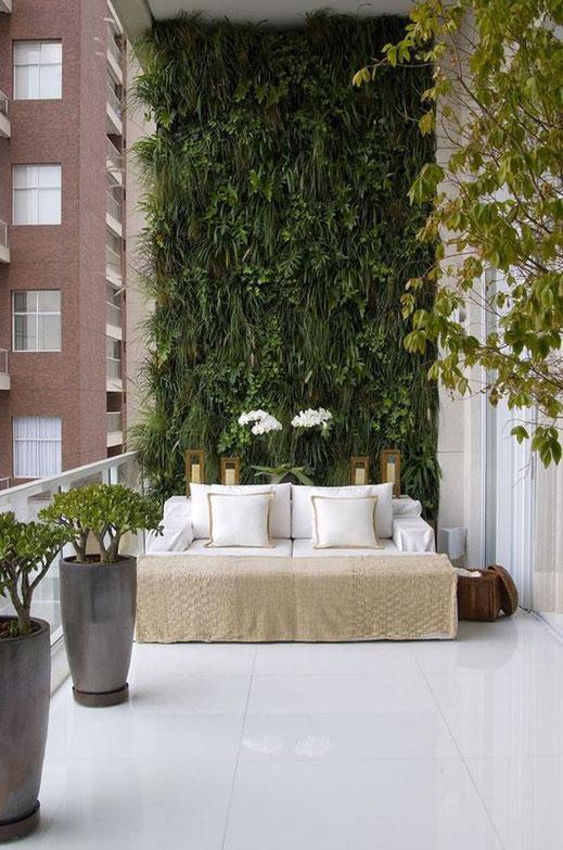 mur habillé mur végétal