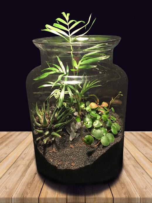 terrarium décoration marseille