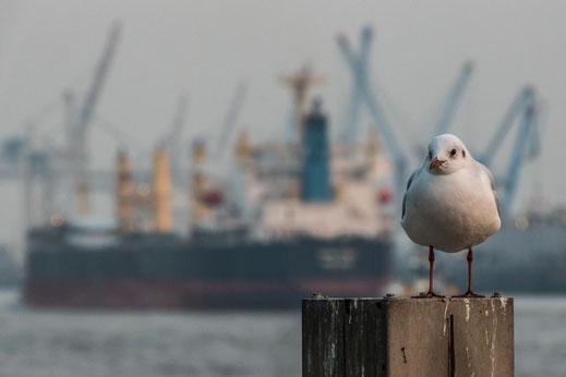 Hamburg Moewe Landungsbruecken Schiff Hafen Hamburg Kraene