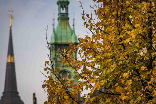 Herbstlaub Baum Turm Uhr Kirchturm Speicherstadt Hamburg