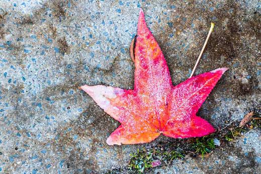 Blatt gefrorener Boden Beton Hamburg Herbst Rot