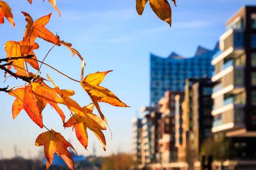 Herbst Herbstlaub Orange Ast Hafencity Architektur Elbphilharmonie