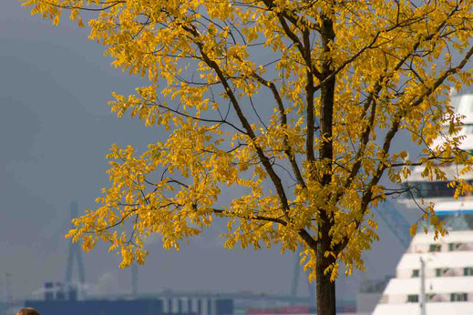 AIDA Kreuzfahrtschiff Schiff Hafencity Universitaet Hamburg