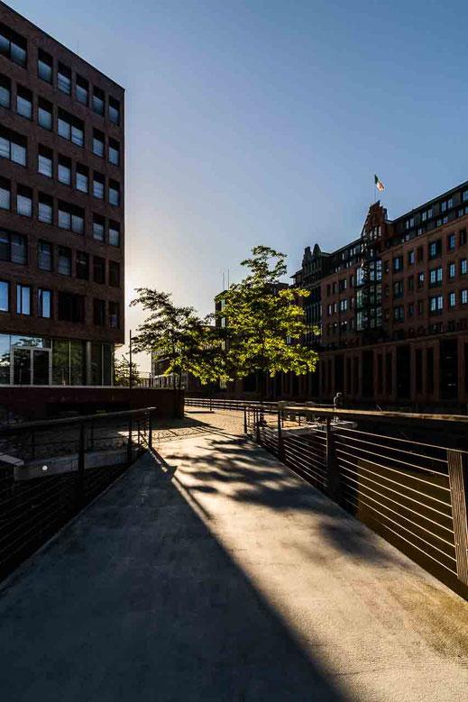 Baeume Gegenlicht Schatten Gebaeude Architektur Wasser Hamburg