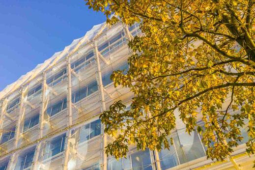 Herbstlaub Unilever Gebaeude Architektur Herbstlicht Baum Hamburg
