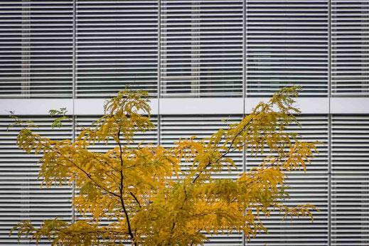 Baum Linien Gelb Kontrast Hamburg Hafencity