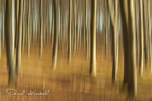 Wald auf Rügen, Deutschland - photoadventure.ch, dk-photography.ch, Fotograf: Daniel Kneubühl / Copyright by DK Photography