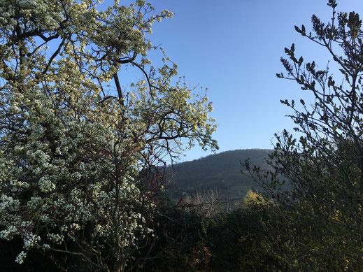 Birnbaum und Flieder