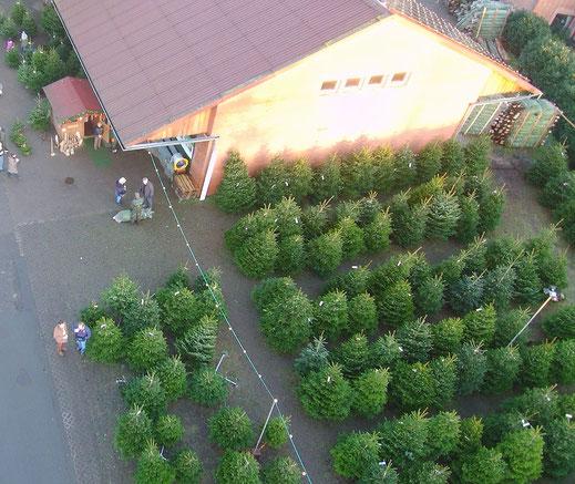 Weihnachtsbaumverkauf Hellwege Forsthof Prüser