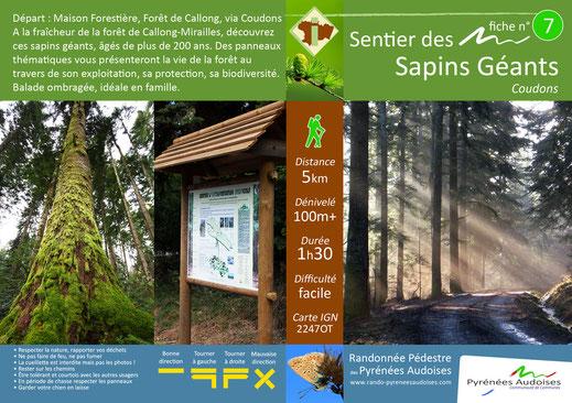 Sapins Géants - Randonnées Pyrénées Audoises
