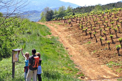 Sentier des Dinosaures - vignes de Salasar - Rando Pyrénées Audoises